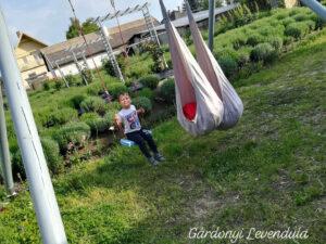 Gárdonyi_Levendula_kert